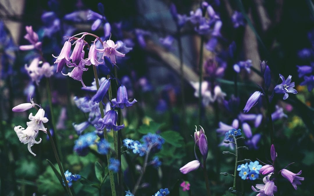 Bluebell photography Tips